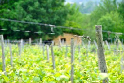 clos église - vigne