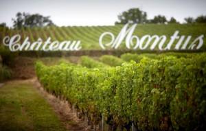 Vigne Montus